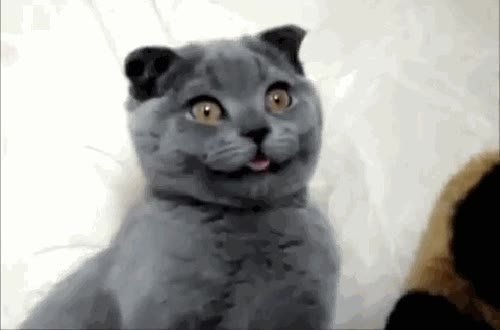Enlace a Gato sufriendo un error en matrix