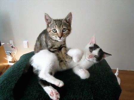 Enlace a Algunos gatos se han hecho masajistas para ganarse la vida