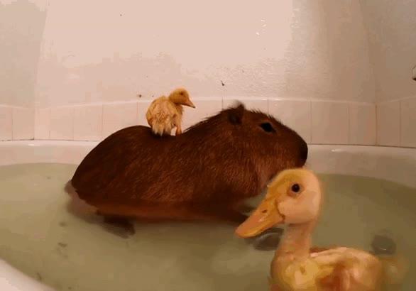 Enlace a Party hard en la bañera