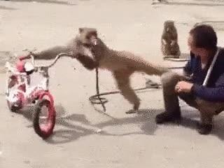 Enlace a Te roban la bici, un cigarro y encima te llevas dos patadas