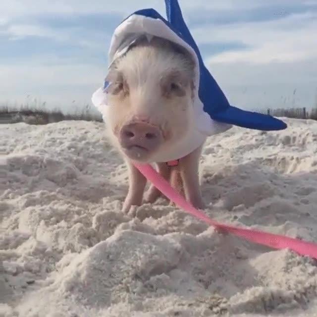 Enlace a Salvad a las mujeres y los niños. ¡Hay un tiburón en la playa!