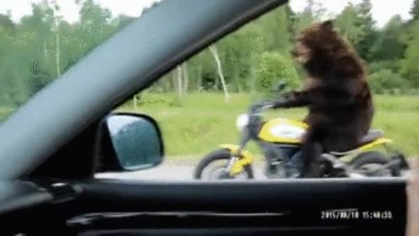 Enlace a Los osos en Russia han evolucionado bastante