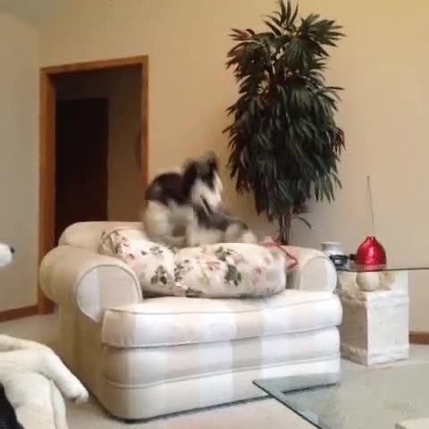Enlace a Los perros saben que es totalmente necesario dar dos vueltas para estar cómodo