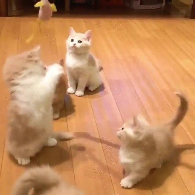 Enlace a Adorabilidad nive: gatitos intentando atrapar un ratón