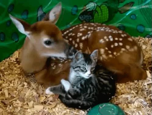 Enlace a Pues yo la historia de Bambi la recordaba distinta