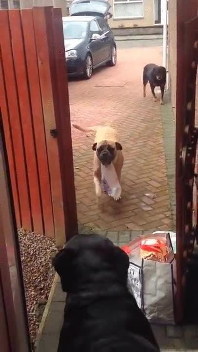 Enlace a Hay pocas cosas tan adorables como estos perros ayudando con la lista de la compra