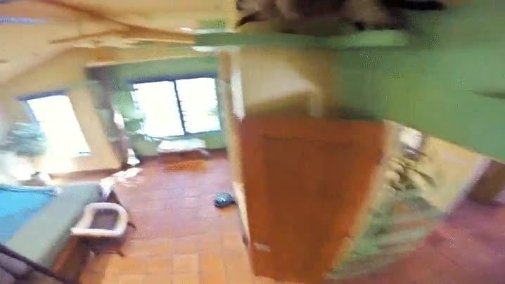 Enlace a La casa perfecta para un gato
