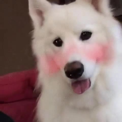Enlace a Snapchat + Perro = Risas aseguradas