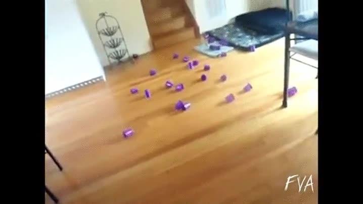 Enlace a Cómo jugar a bolos con tu gato sin que nadie salga herido