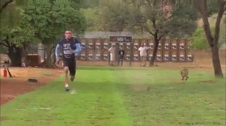 Enlace a Un atleta profesional y un guepardo se retan a un carrera