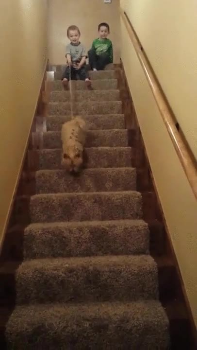 Enlace a La forma más divertida de bajar las escaleras junto a tu perro