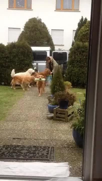 Enlace a Más perros que ayudan con la compra. Así da gusto