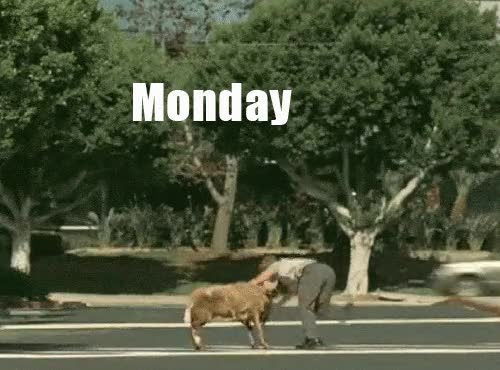 Enlace a ¡Feliz lunes!