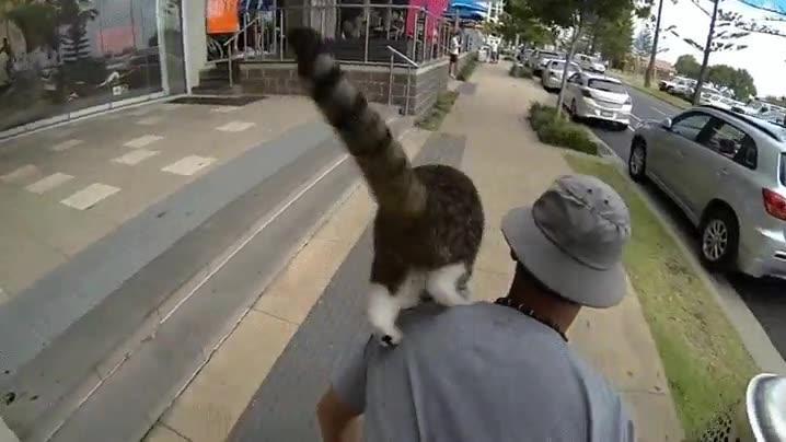 Enlace a Hay que reconocer que este gato es más hábil que muchos de nosotros
