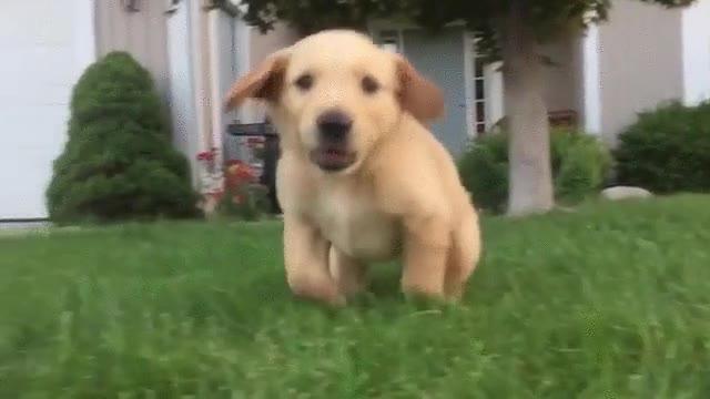 Enlace a Es imposible escapar del temible ataque de este cachorro
