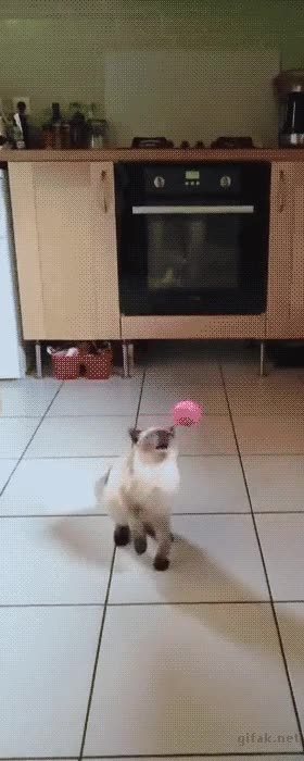 Enlace a Gatos bastante faltos de reflejos