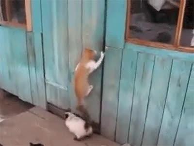 Enlace a Estos gatos han aprendido que trabajando en equipo se llega más lejos