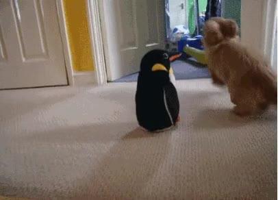 Enlace a Perros conscientes de la superioridad de un pingüino de juguete