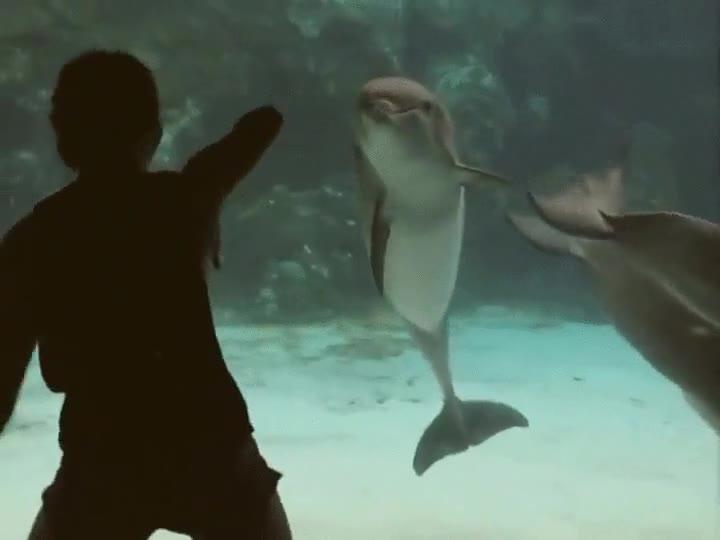 Enlace a Los delfines llevan décadas haciendo trucos paras los humanos. Ahora nos toca a nosotros