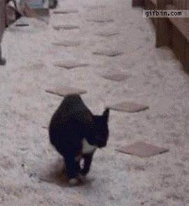 Enlace a Gatos que también juegan a ''El suelo es lava''
