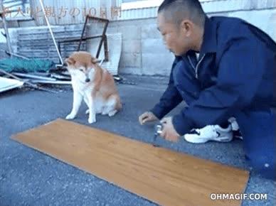 Enlace a Este perro será un excelente carpintero