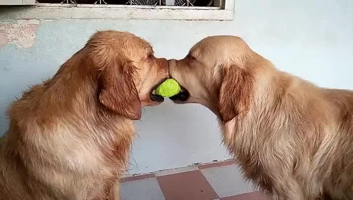 Enlace a Perros bugueados. Error en Matrix