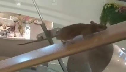 Enlace a Ratas que se ahorra la cuota del gimnasio entrenando en el centro comercial