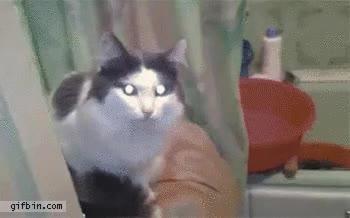 Enlace a Hasta los gatos necesitan un poco de intimidad