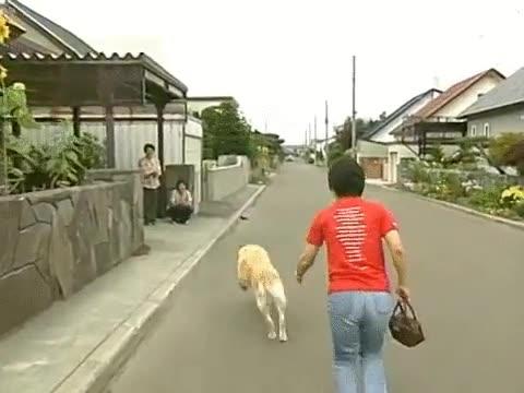 Enlace a Un perro guía retirado regresa con sus amos 11 años después