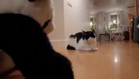 Enlace a La épica batalla psicológica entre un gato y un panda