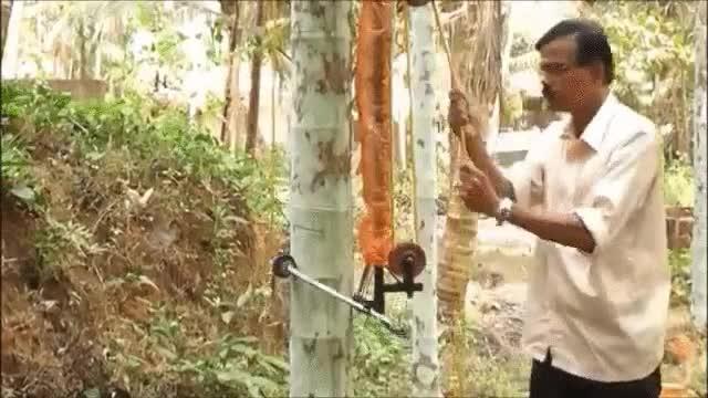 Enlace a Con todos ustedes, la máquina que escala árboles