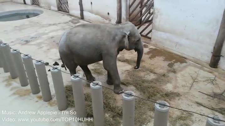 Enlace a Elefantes con más ritmo en el cuerpo del que tendrás nunca