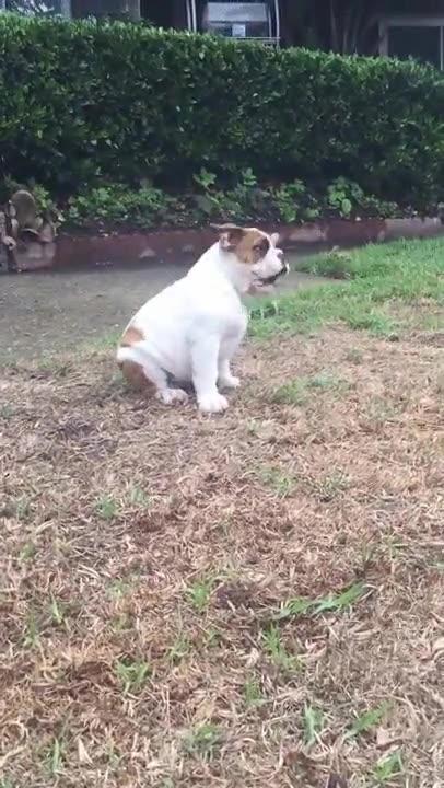 Enlace a La reacción de un cachorro cuando ve la lluvia por primera vez