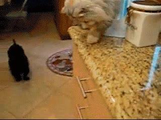 Enlace a Gato alimentando a su hambriento amigo