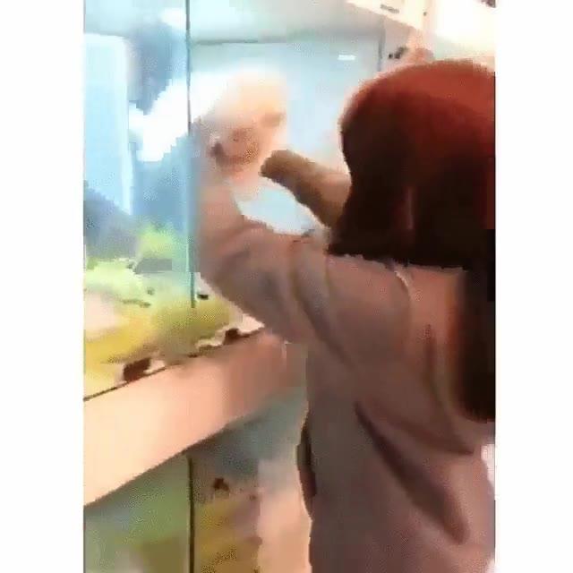 Enlace a Perros obsesionados con hacer el
