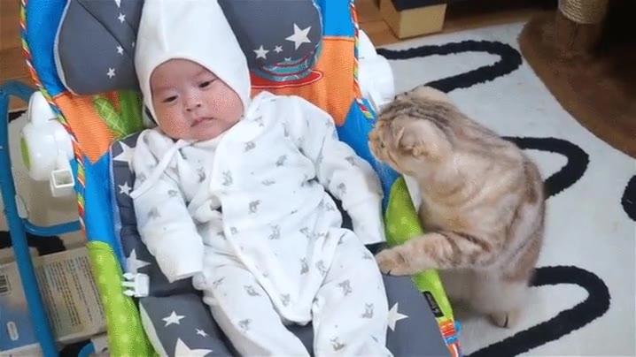 Enlace a Gato curioso conociendo a un bebé humano