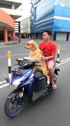 Enlace a Cuando te saques el carné de moto piensa en este perro