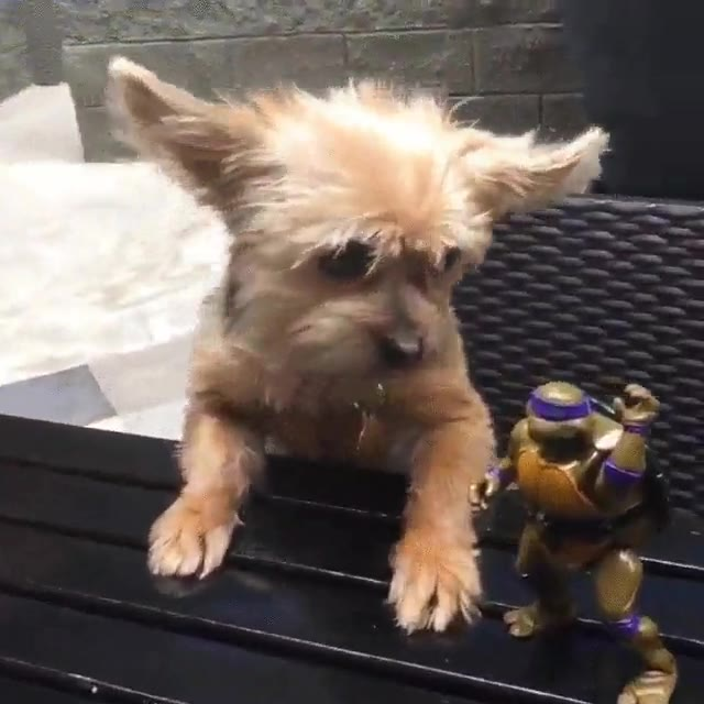 Enlace a Donatello estaría muy orgulloso de estas habilidades