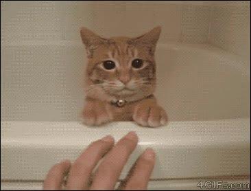 Enlace a Gatos que se sienten avergonzados y parecen decir: Tierra trágame