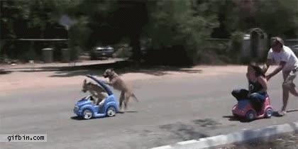 Enlace a La primera prueba de las olimpiadas de perros vs humanos la han ganado ellos