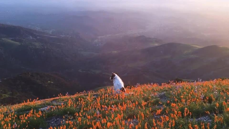 Enlace a Los perros también se toman un descanso para contemplar las vistas