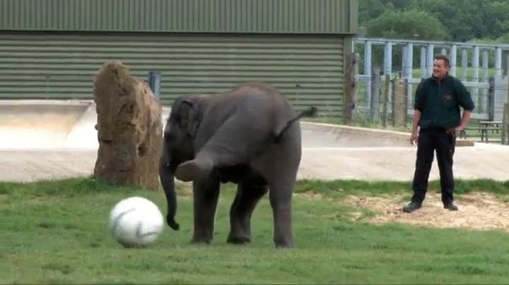 Enlace a Elefantes con más habilidad para pasarla de tacón que muchos de nosotros