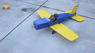 Enlace a Ardillas que se han cansado de saltar de árbol en árbol y construyen su propio avión