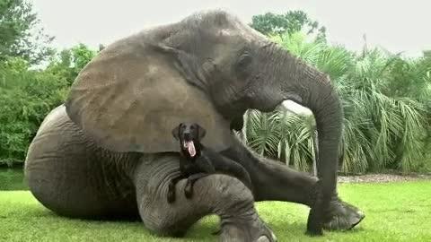 Enlace a A veces la naturaleza permite que dos especies que no tienen nada en común se hagan amigas