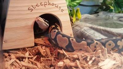 Enlace a Serpientes lo suficientemente listas para saber cuál es el mejor sitio para echarse una siesta