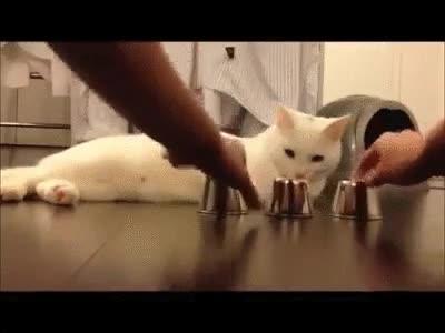 Enlace a La inteligencia de este gato te dejará sin palabras