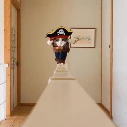 Enlace a El gato pirata más aterrador de los siete mares
