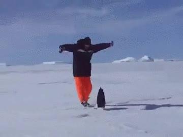 Enlace a Este pingüino es capaz de focalizar su energía en un solo punto para derribar a su presa sin tocarla