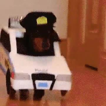 Enlace a Perros jugando a policías y ladrones