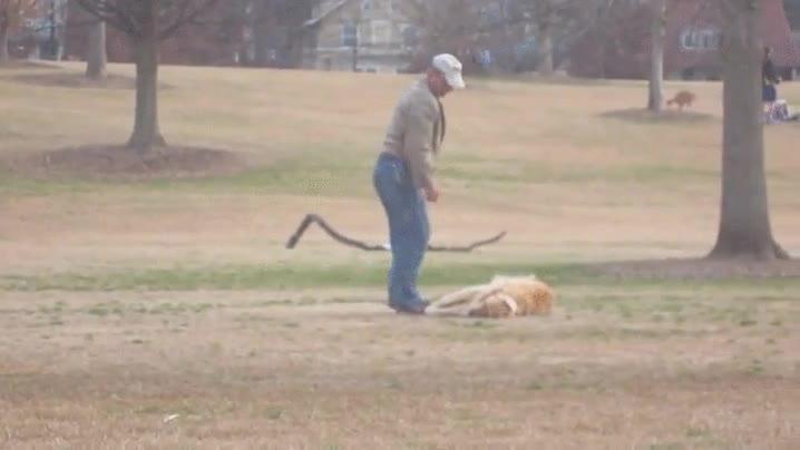 Enlace a Parece que alguien se lo está pasando muy bien en el parque y no tiene ganas de volver a casa